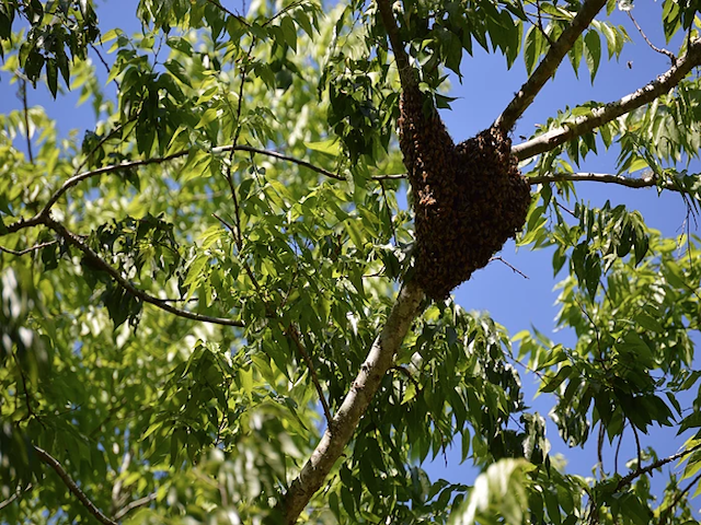 Bee Hive located in Orlando, Fl