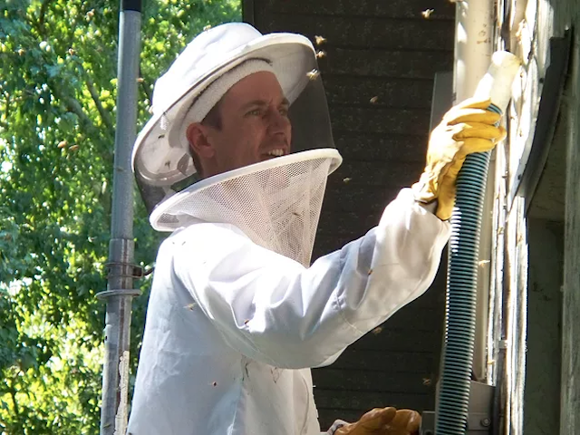 live Bee Removal